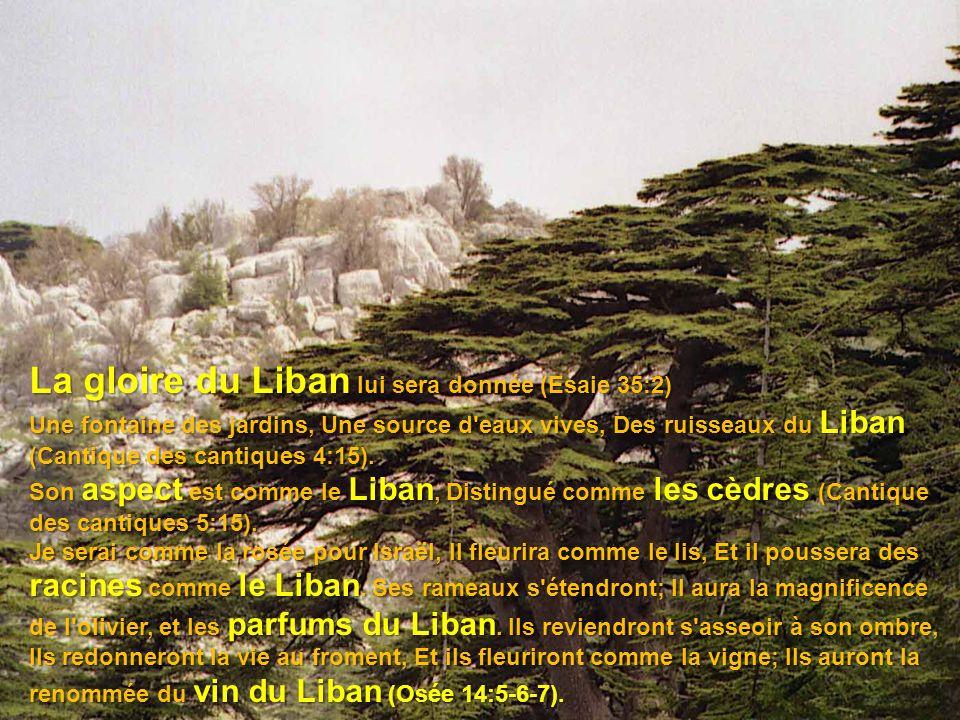 Les arbres de l Éternel se rassasient, Les cèdres du Liban, qu il a plantés Ps 104:16.
