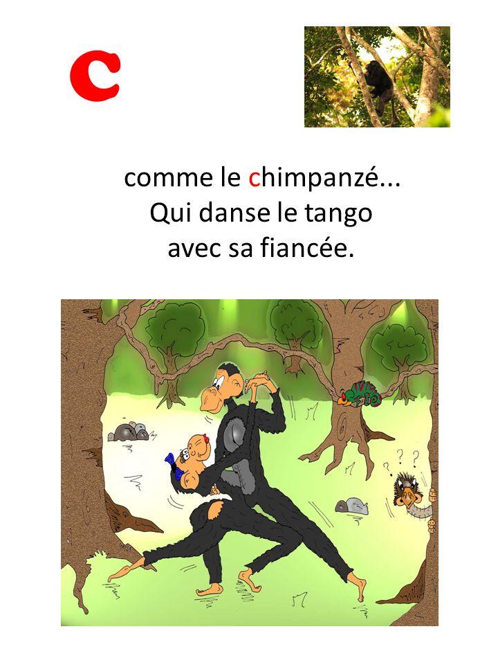C comme le chimpanzé... Qui danse le tango avec sa fiancée.