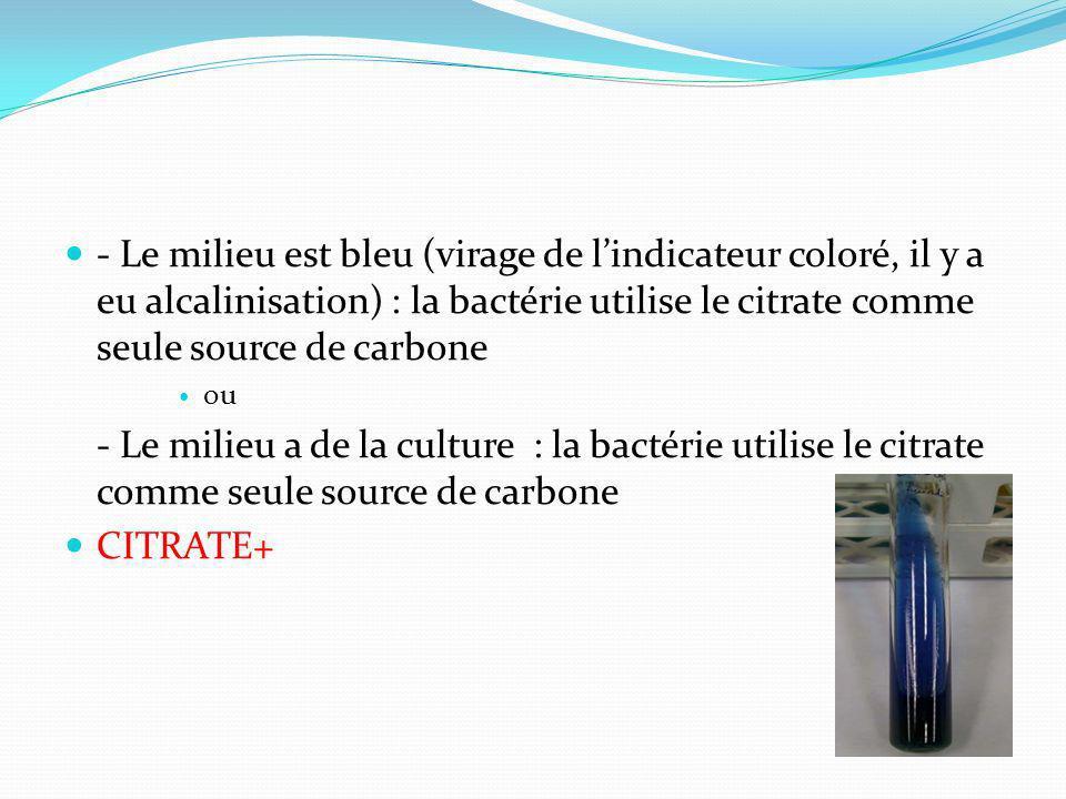 - Le milieu est bleu (virage de lindicateur coloré, il y a eu alcalinisation) : la bactérie utilise le citrate comme seule source de carbone ou - Le m