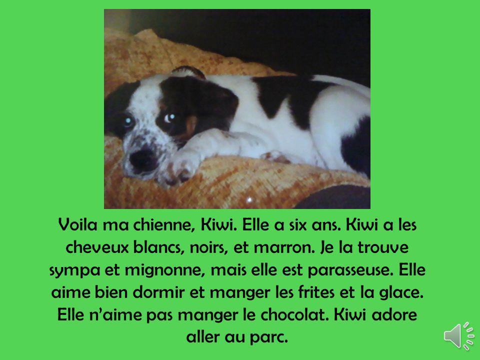 Voila ma chienne, Kiwi.Elle a six ans. Kiwi a les cheveux blancs, noirs, et marron.