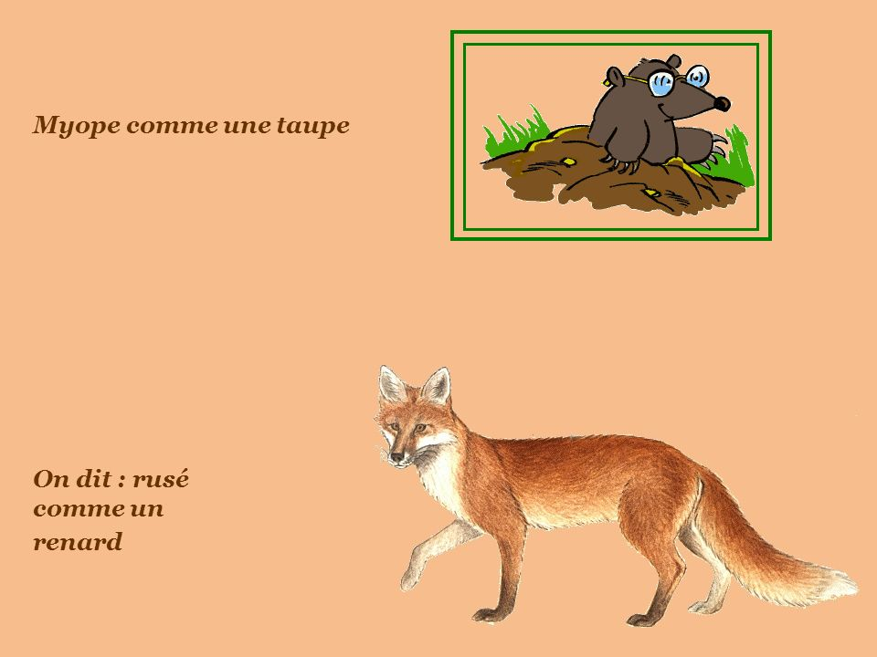 Vachement bien la langue française .Les termes empruntés au monde animal sont partout.