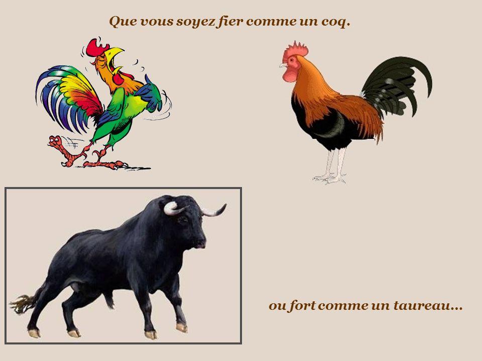 Que vous soyez fier ou fort comme un coq. comme un taureau…
