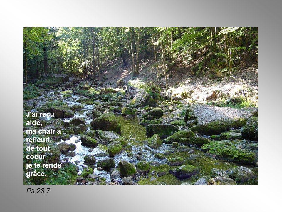 J'ai reçu aide, ma chair a refleuri, de tout coeur je te rends grâce. Ps,28,7