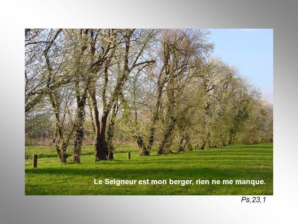 Le Seigneur est mon berger, rien ne me manque. Ps,23,1