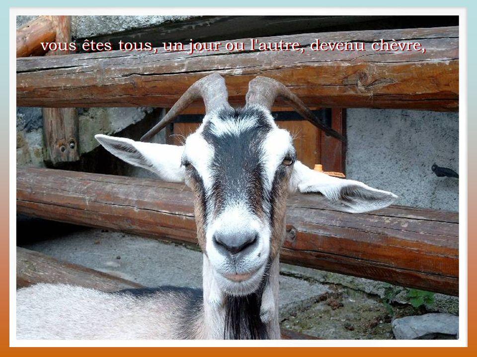 vous êtes tous, un jour ou l autre, devenu chèvre,