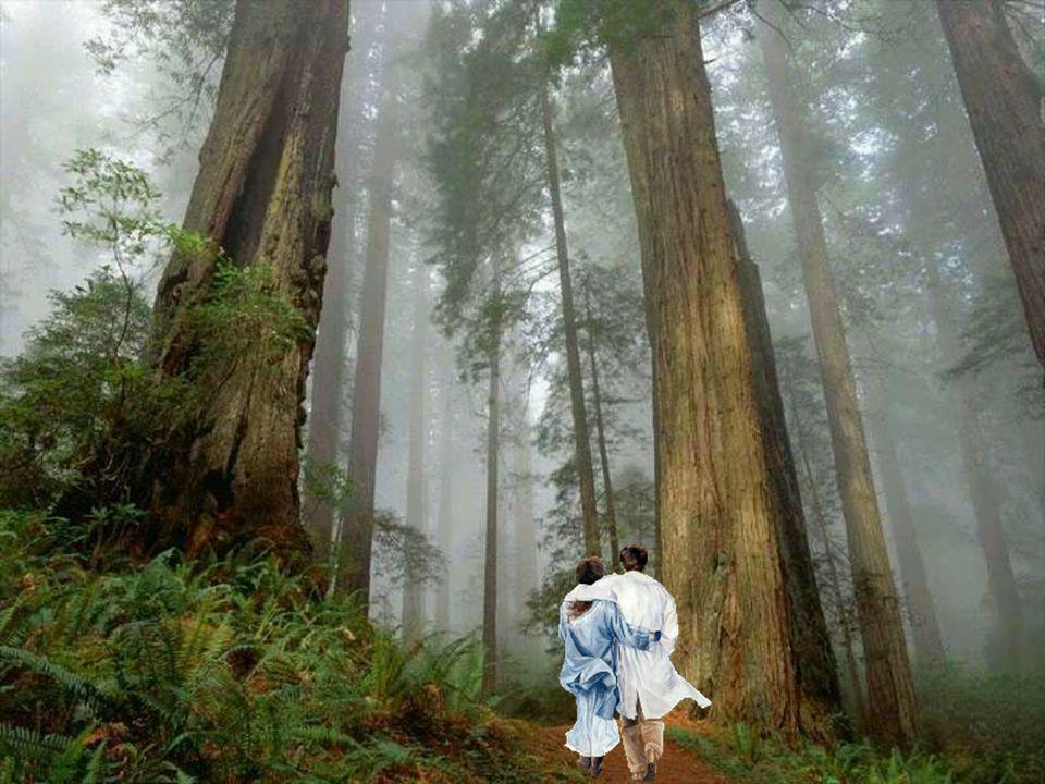 L'amour est comme un arbre… Alors ne laissez pas les bûcherons l'attaquer, Qu'ils se nomment jalousie ou encore faux ami(es). Eux qui feront tout pour
