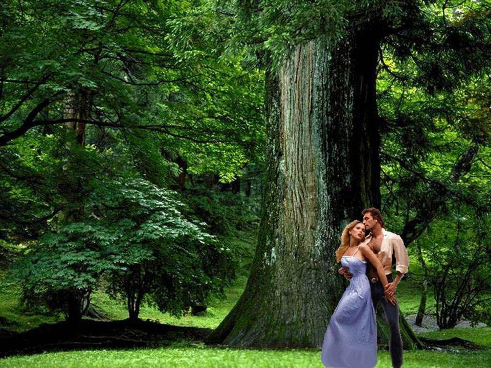 L'amour est comme un arbre… Il a besoin de racines fortes pour croître et prospérer. Pas une simple passion qui s'essouffle très vite, mais un désir p