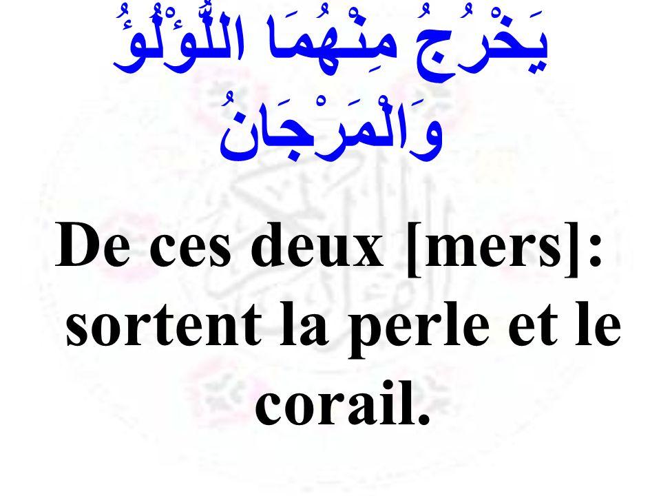 يَخْرُجُ مِنْهُمَا اللُّؤْلُؤُ وَالْمَرْجَانُ De ces deux [mers]: sortent la perle et le corail.