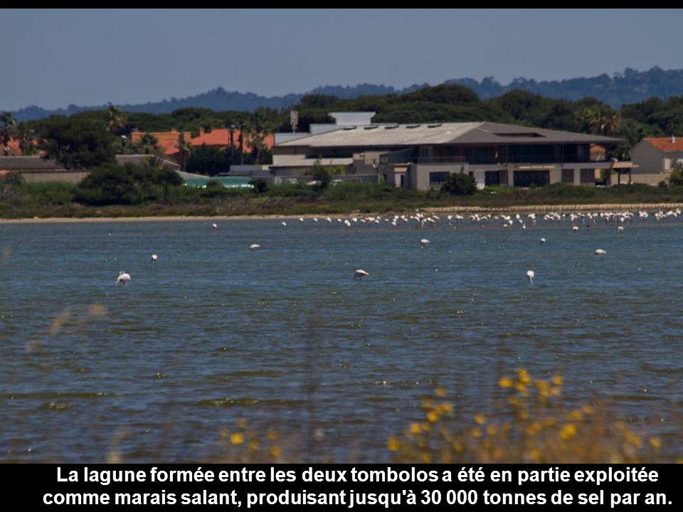 La lagune formée entre les deux tombolos a été en partie exploitée comme marais salant, produisant jusqu à 30 000 tonnes de sel par an.