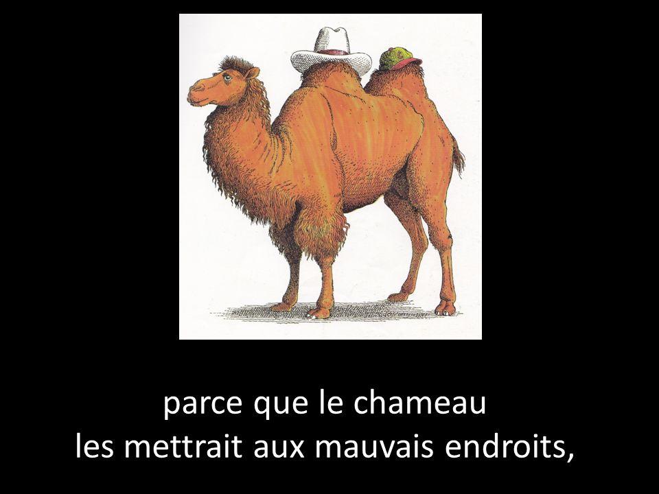 parce que le chameau les mettrait aux mauvais endroits,