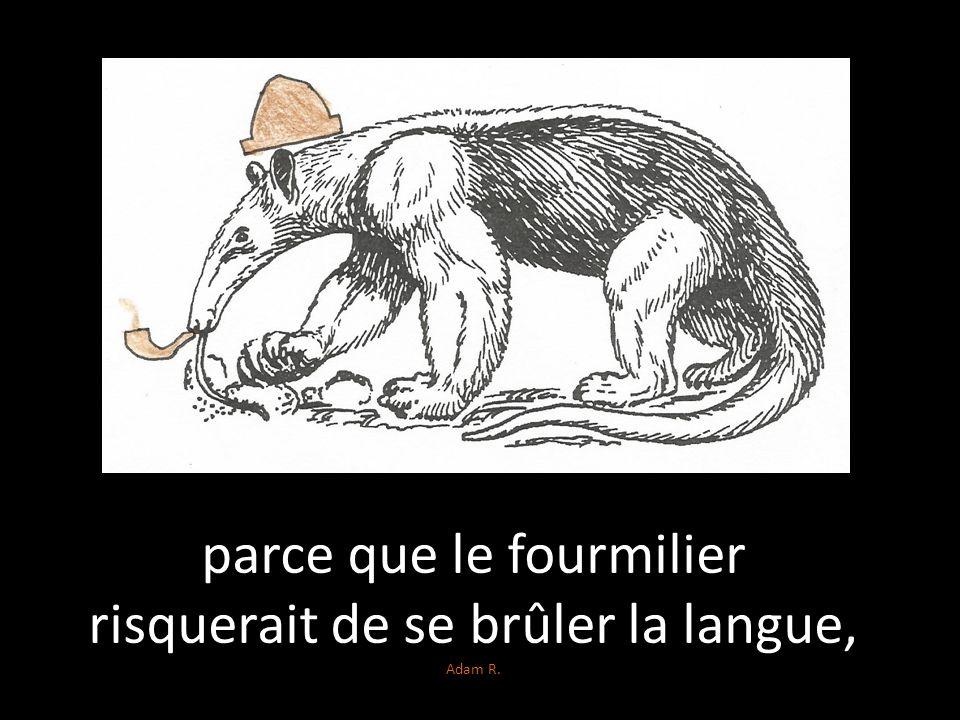 parce que le fourmilier risquerait de se brûler la langue, Adam R.