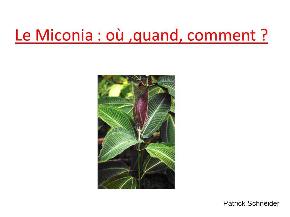 Le Miconia : où,quand, comment ? Patrick Schneider