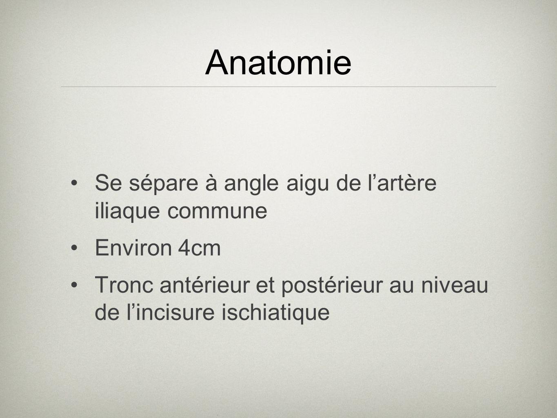 Se sépare à angle aigu de lartère iliaque commune Environ 4cm Tronc antérieur et postérieur au niveau de lincisure ischiatique Anatomie