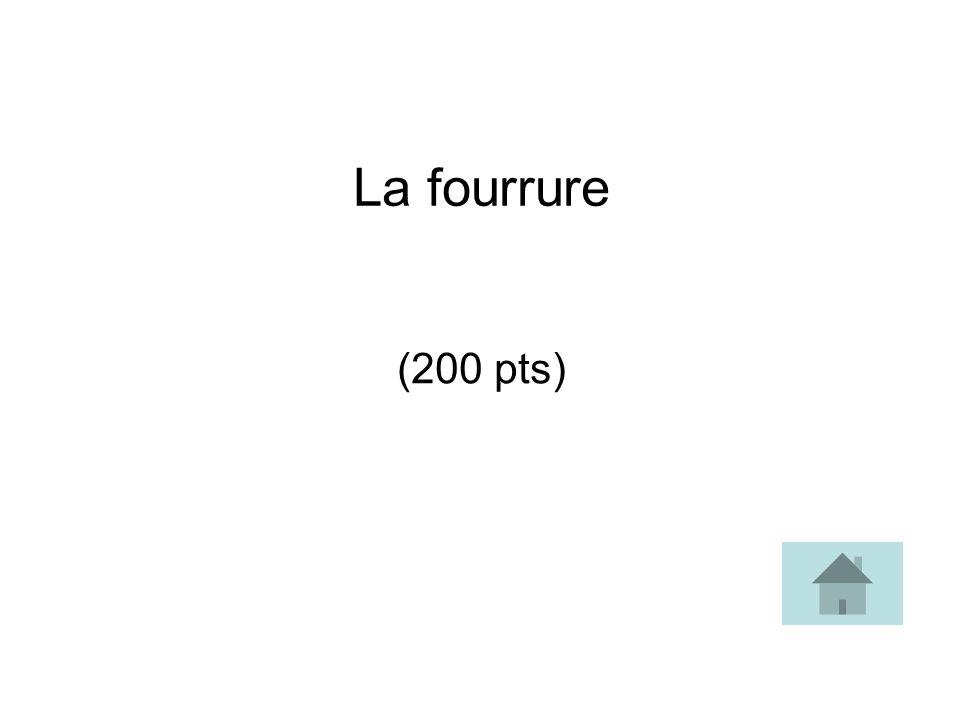 La fourrure (200 pts)