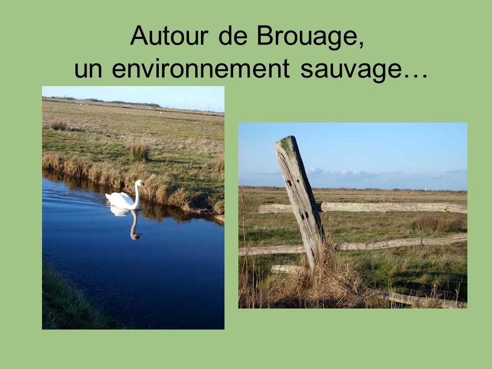 Autour de Brouage, un environnement sauvage…