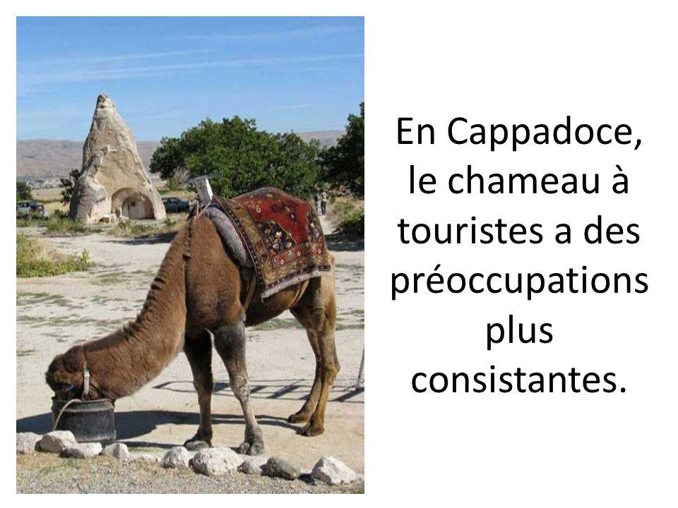 En Cappadoce, le chameau à touristes a des préoccupations plus consistantes.