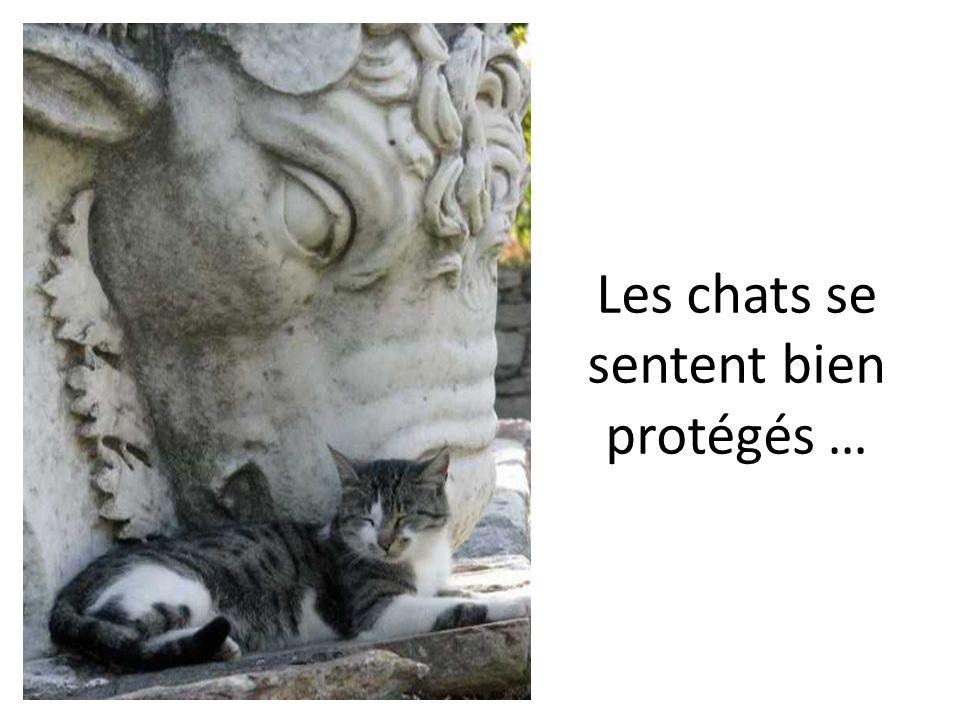 Les chats se sentent bien protégés …