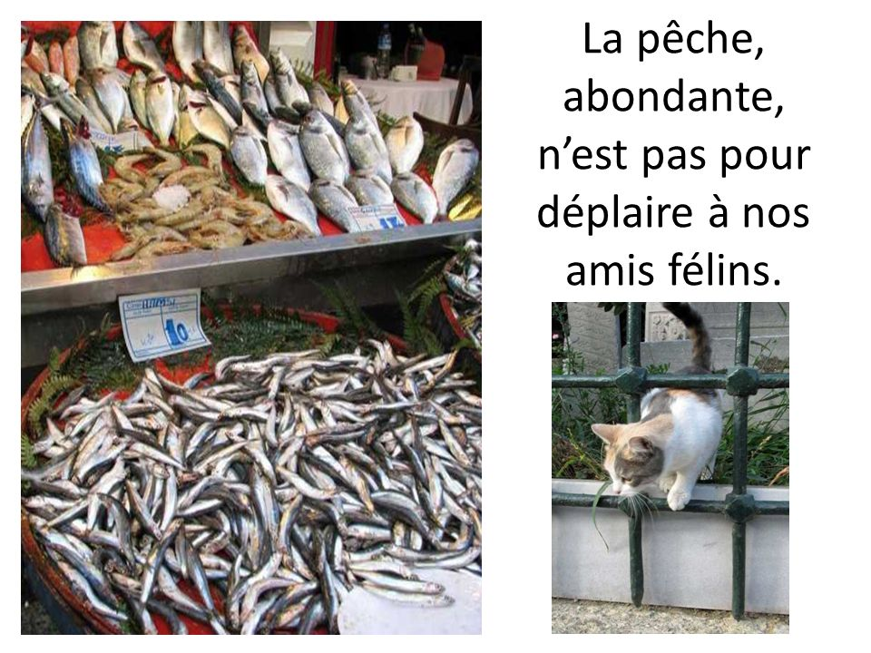 La pêche, abondante, nest pas pour déplaire à nos amis félins.