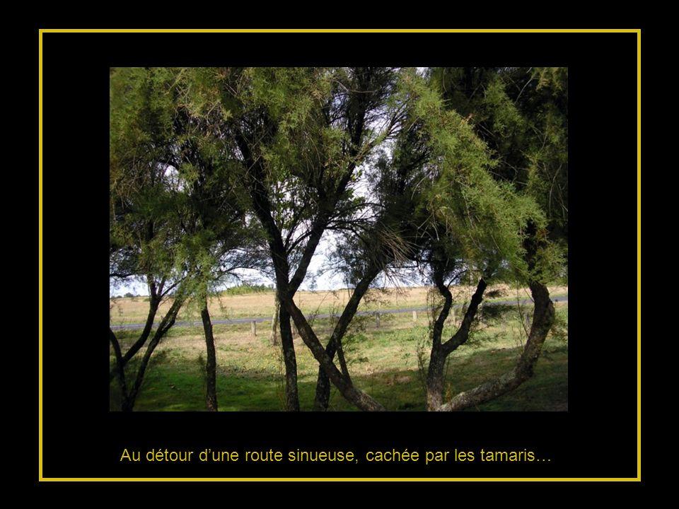 Au détour dune route sinueuse, cachée par les tamaris…