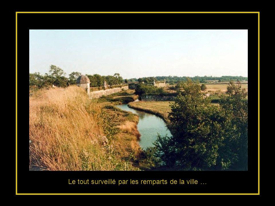 … remplacé par des marais doù surgissent détranges cabanes…