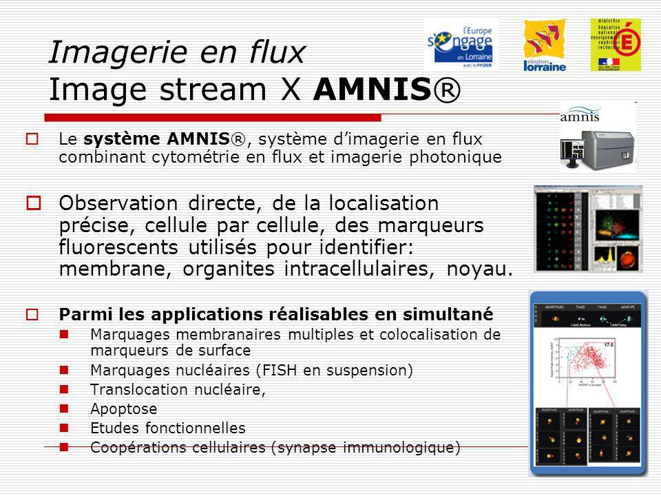 Imagerie en flux Image stream X AMNIS® Le système AMNIS®, système dimagerie en flux combinant cytométrie en flux et imagerie photonique Observation directe, de la localisation précise, cellule par cellule, des marqueurs fluorescents utilisés pour identifier: membrane, organites intracellulaires, noyau.