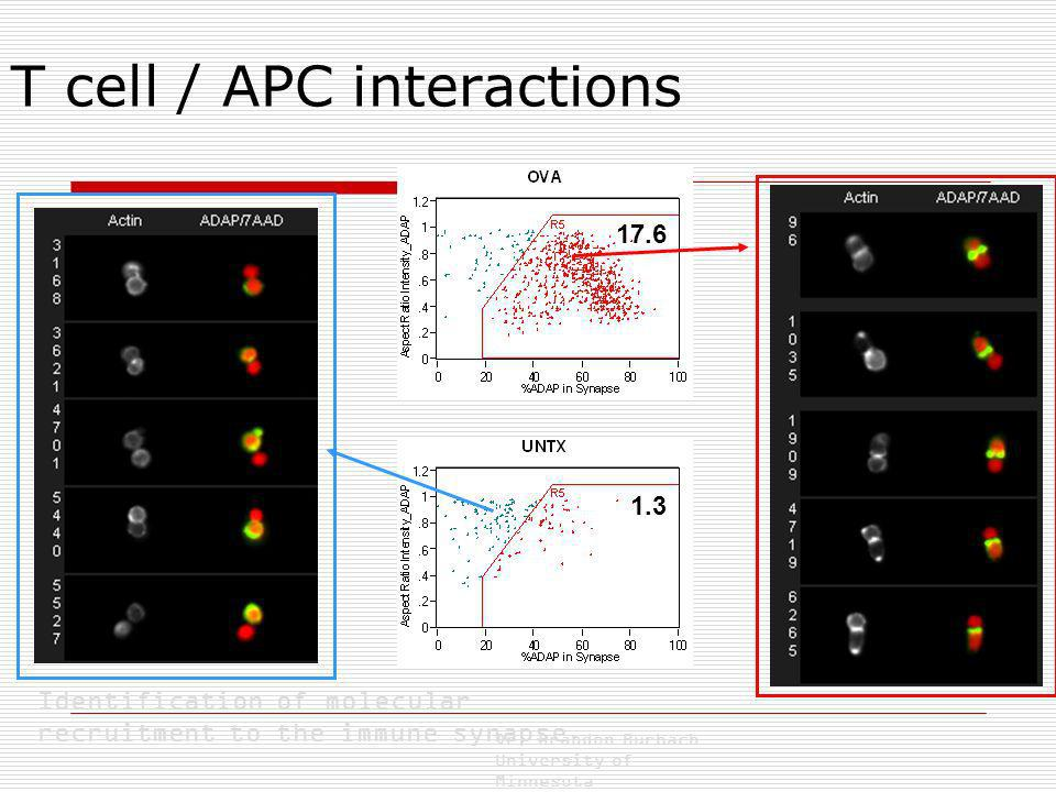 T cell / APC interactions Identification of molecular recruitment to the immune synapse. Dr. Brandon Burbach University of Minnesota 17.6 1.3
