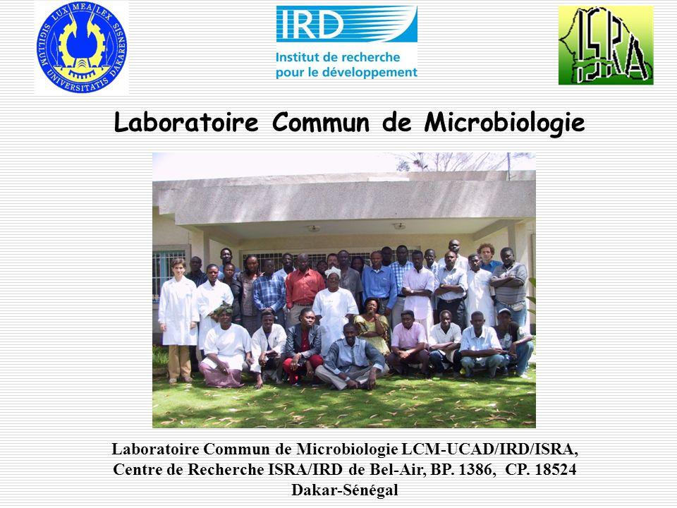 Unité de Microbiologie: Créée en 2004 du laboratoire de biologie des sols de lIRD Implantée au centre de recherche ISRA/IRD à Bel air Rattachée à lUMR113/LSTM IRD-CIRAD-UM2-INRA Renforcée par lUMR232/DIADE/IRD-UM2 en 2010 Regroupe des chercheurs et enseignants-chercheurs de lUCAD, de lIRD et de lISRA Structurée en une équipe de recherche Laboratoire Commun de Microbiologie