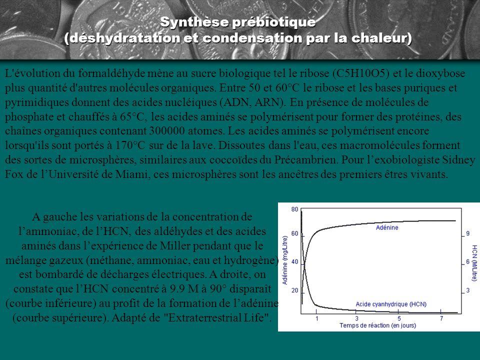 Synthèse prébiotique (déshydratation et condensation) Synthèse des bases puriques adénine et guanine à partir de la polycondensation de l acide cyanhydrique.