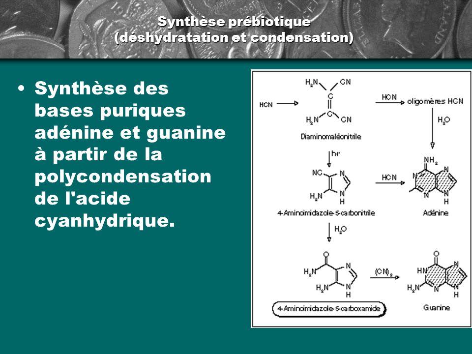 Synthèse prébiotique (déshydratation et condensation) Synthèse des bases puriques adénine et guanine à partir de la polycondensation de l'acide cyanhy