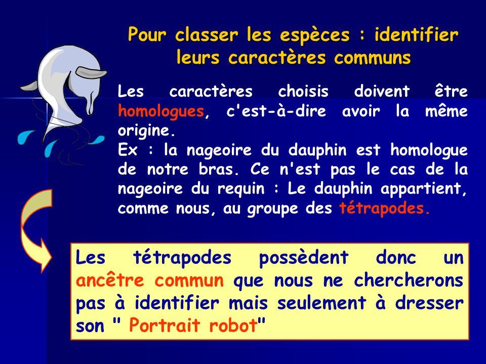 Pour classer les espèces : identifier leurs caractères communs Les caractères choisis doivent être homologues, c'est-à-dire avoir la même origine. Ex