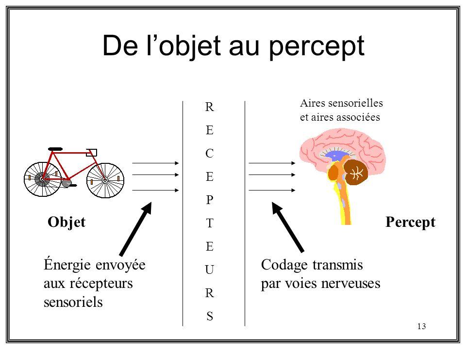 13 De lobjet au percept Objet RECEPTEURSRECEPTEURS Énergie envoyée aux récepteurs sensoriels Codage transmis par voies nerveuses Aires sensorielles et