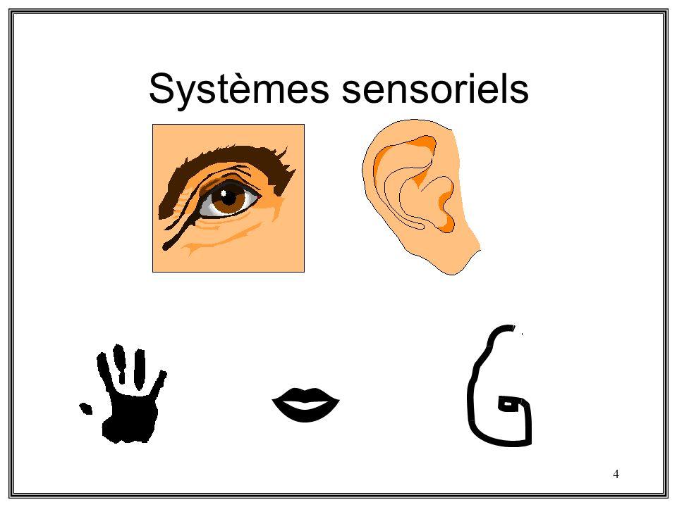 4 Systèmes sensoriels