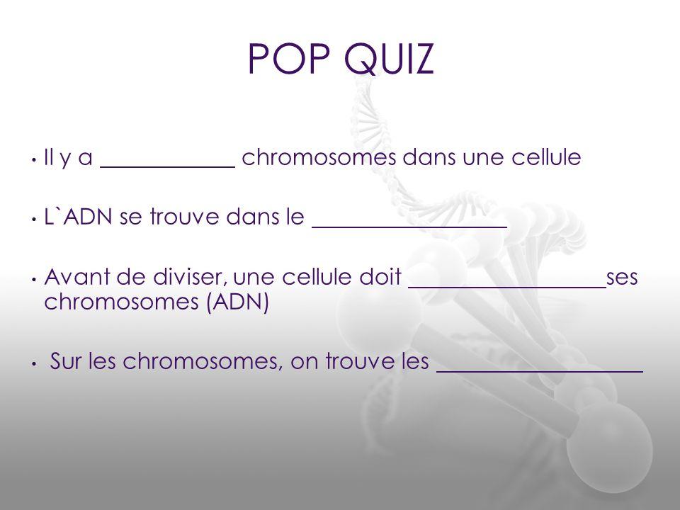 POP QUIZ Il y a chromosomes dans une cellule L`ADN se trouve dans le Avant de diviser, une cellule doit ses chromosomes (ADN) Sur les chromosomes, on