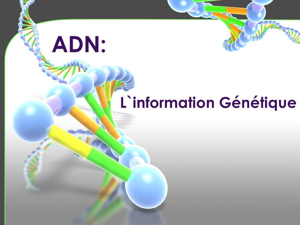 Le dédoublement processus par lequel l`ADN fait une copie exacte Un gène: Long section d`ADN qui détermine une caractéristique Il y a entre 100 000 et 125 000 gènes sur tes chromosomes (dans une cellule!) ADN: acide désoxyribonucléique Il y a 4 bases d`azote dans l`ADN L`ADN forme une échelle Les bases d`azote se mettent en paires de deux Ces paires forment les rangs de l`échelle