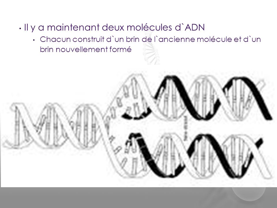 Un image de tes chromosomes Le Caryotype:
