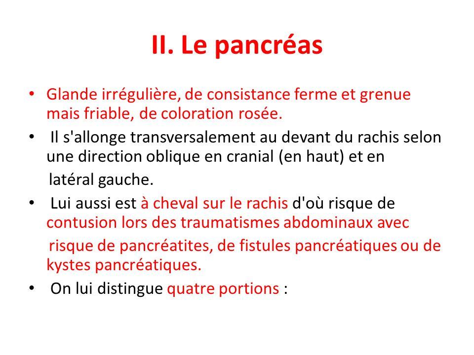 II. Le pancréas Glande irrégulière, de consistance ferme et grenue mais friable, de coloration rosée. Il s'allonge transversalement au devant du rachi