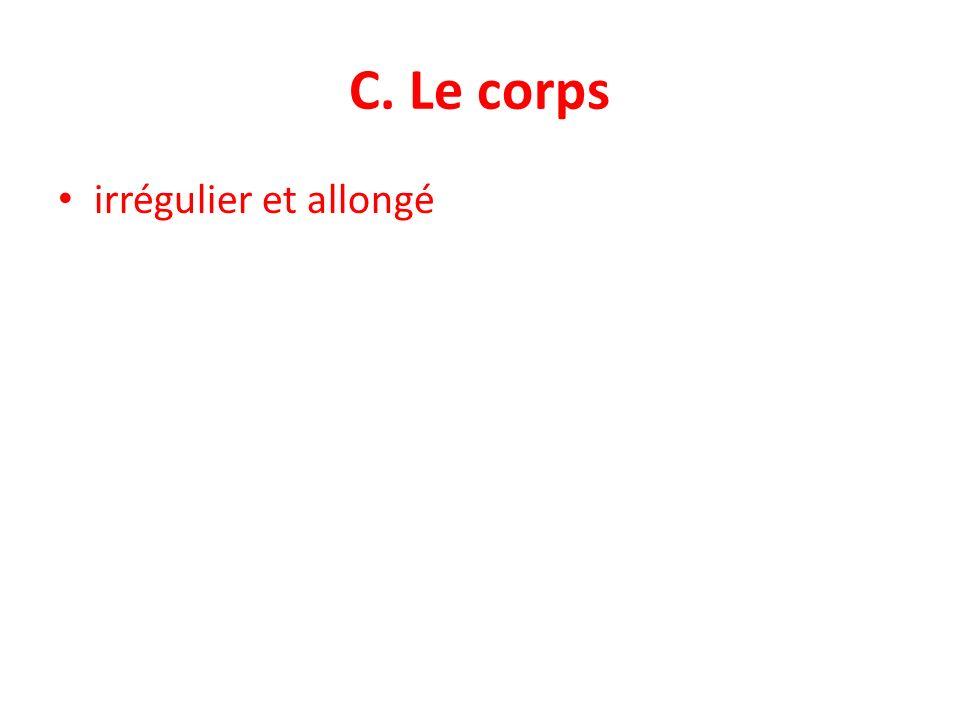 C. Le corps irrégulier et allongé