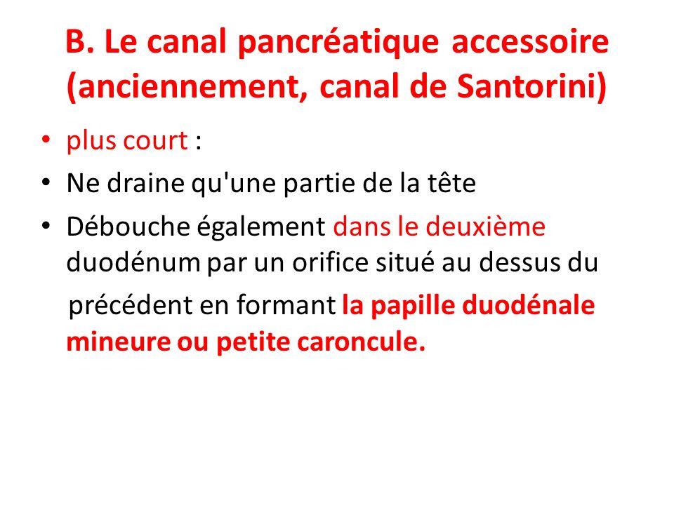 B. Le canal pancréatique accessoire (anciennement, canal de Santorini) plus court : Ne draine qu'une partie de la tête Débouche également dans le deux