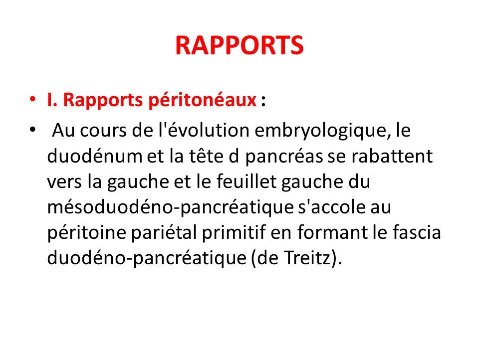 RAPPORTS I. Rapports péritonéaux : Au cours de l'évolution embryologique, le duodénum et la tête d pancréas se rabattent vers la gauche et le feuillet