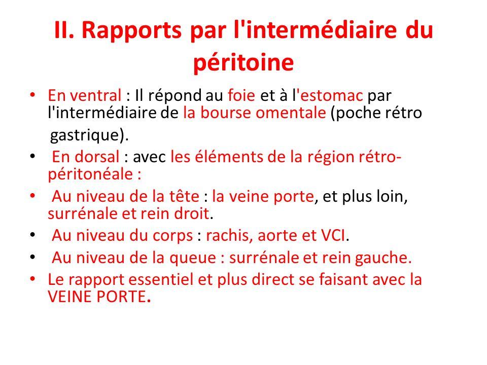 II. Rapports par l'intermédiaire du péritoine En ventral : Il répond au foie et à l'estomac par l'intermédiaire de la bourse omentale (poche rétro gas