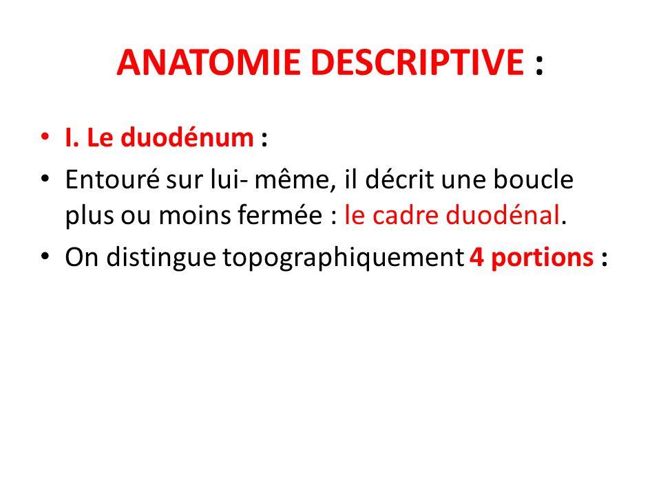 ANATOMIE DESCRIPTIVE : I. Le duodénum : Entouré sur lui- même, il décrit une boucle plus ou moins fermée : le cadre duodénal. On distingue topographiq