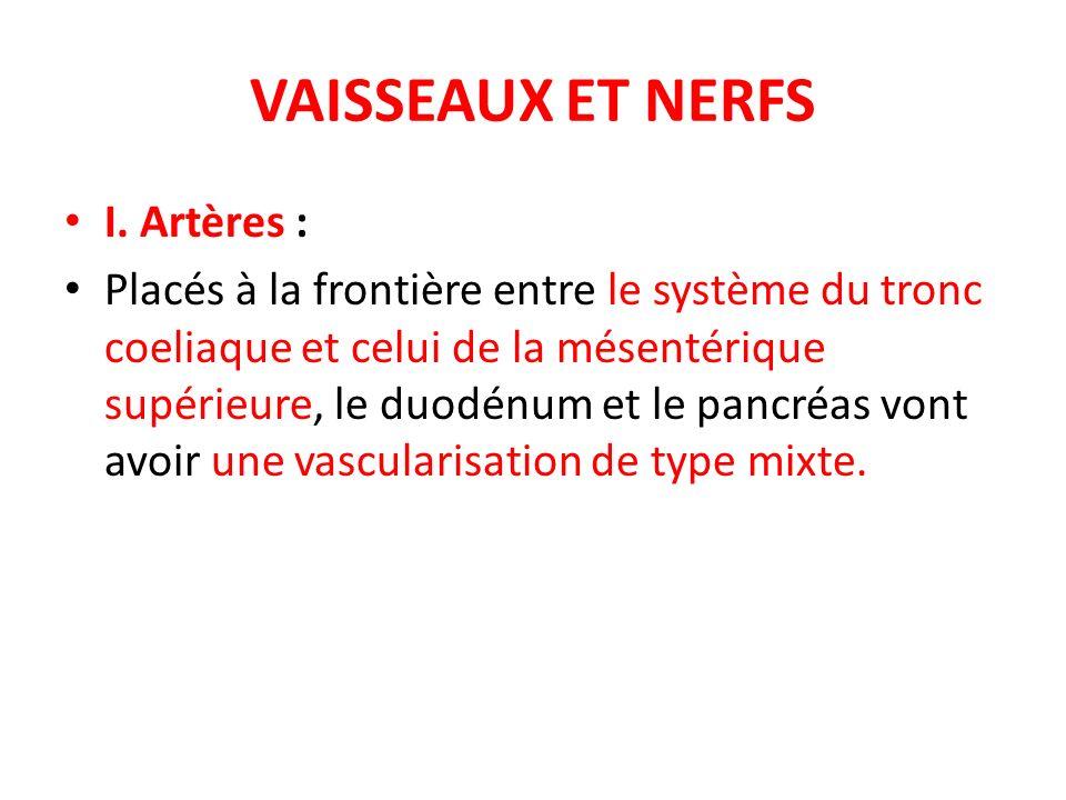 VAISSEAUX ET NERFS I. Artères : Placés à la frontière entre le système du tronc coeliaque et celui de la mésentérique supérieure, le duodénum et le pa