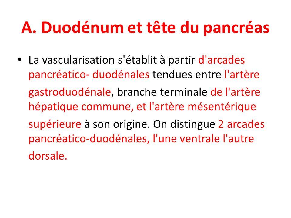 A. Duodénum et tête du pancréas La vascularisation s'établit à partir d'arcades pancréatico- duodénales tendues entre l'artère gastroduodénale, branch