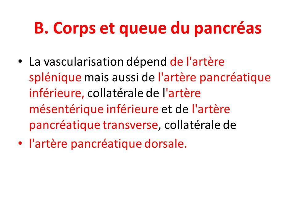 B. Corps et queue du pancréas La vascularisation dépend de l'artère splénique mais aussi de l'artère pancréatique inférieure, collatérale de l'artère