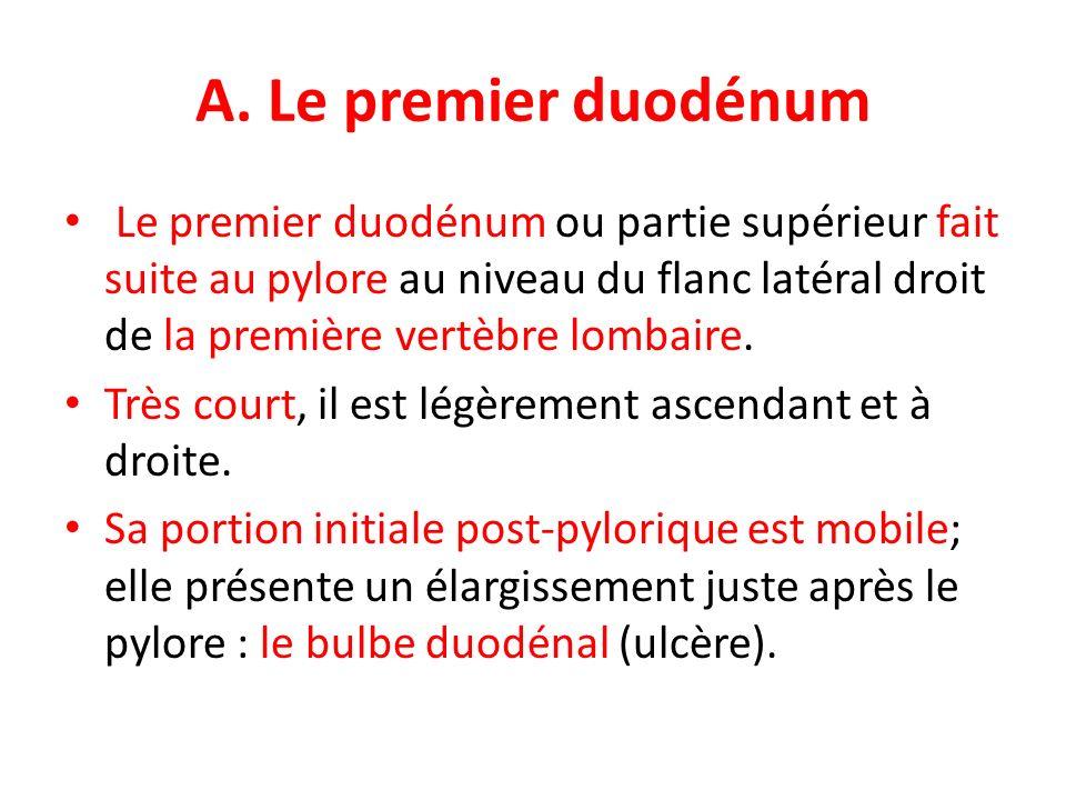 A. Le premier duodénum Le premier duodénum ou partie supérieur fait suite au pylore au niveau du flanc latéral droit de la première vertèbre lombaire.