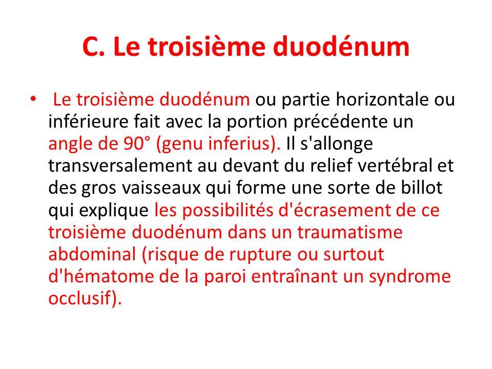 C. Le troisième duodénum Le troisième duodénum ou partie horizontale ou inférieure fait avec la portion précédente un angle de 90° (genu inferius). Il