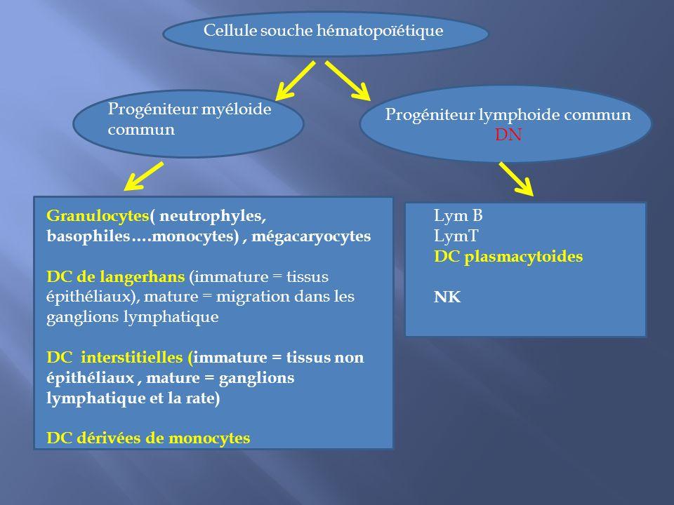 NK DC Reconnaissance CMH/peptide CMH I:peptide CD8 CMH II:peptideCD4 DN DP CD4 - et CD8 - CD4 + et CD8 +