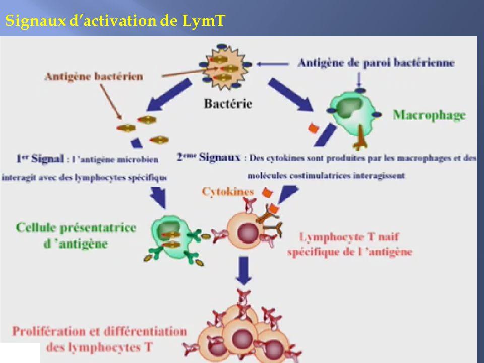 Signaux dactivation de LymT