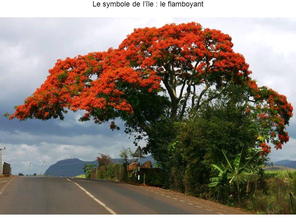 Marché (les Poissons, le thon et espadon (merlin en creole) : Port Louis