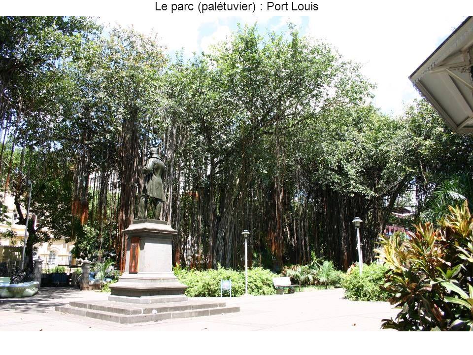 Le parc (palétuvier) : Port Louis